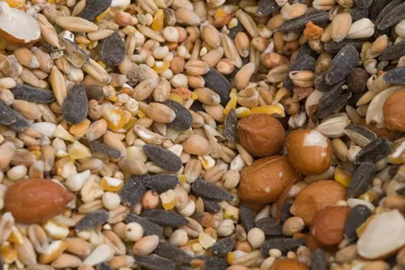 Các loại hạt và ngũ cốc