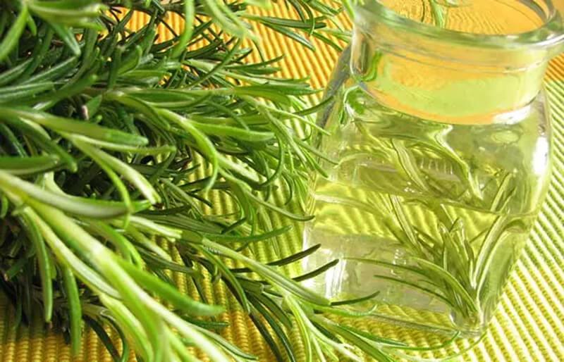 Giấm hương thảo