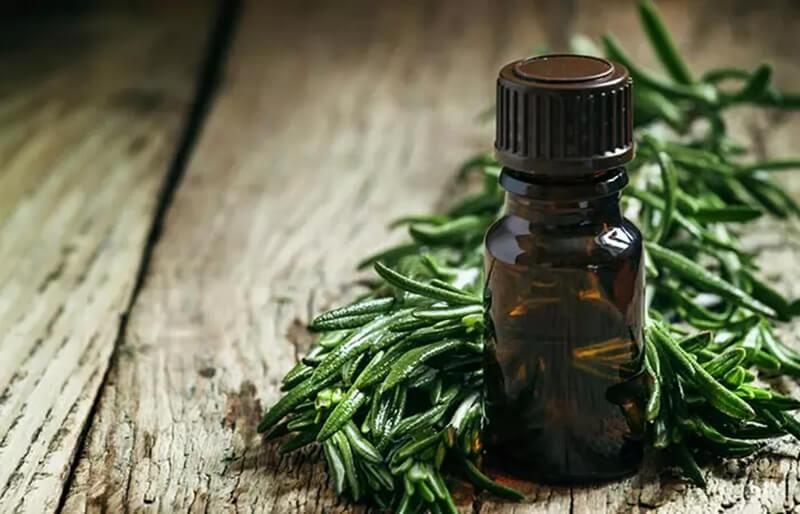 Dầu hương thảo và tinh dầu trà