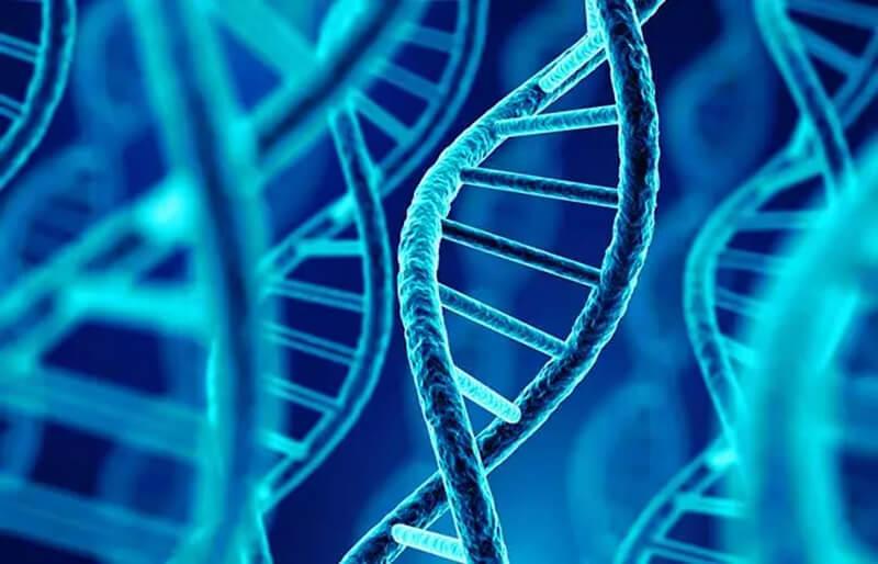 Hỗ trợ tổng hợp DNA